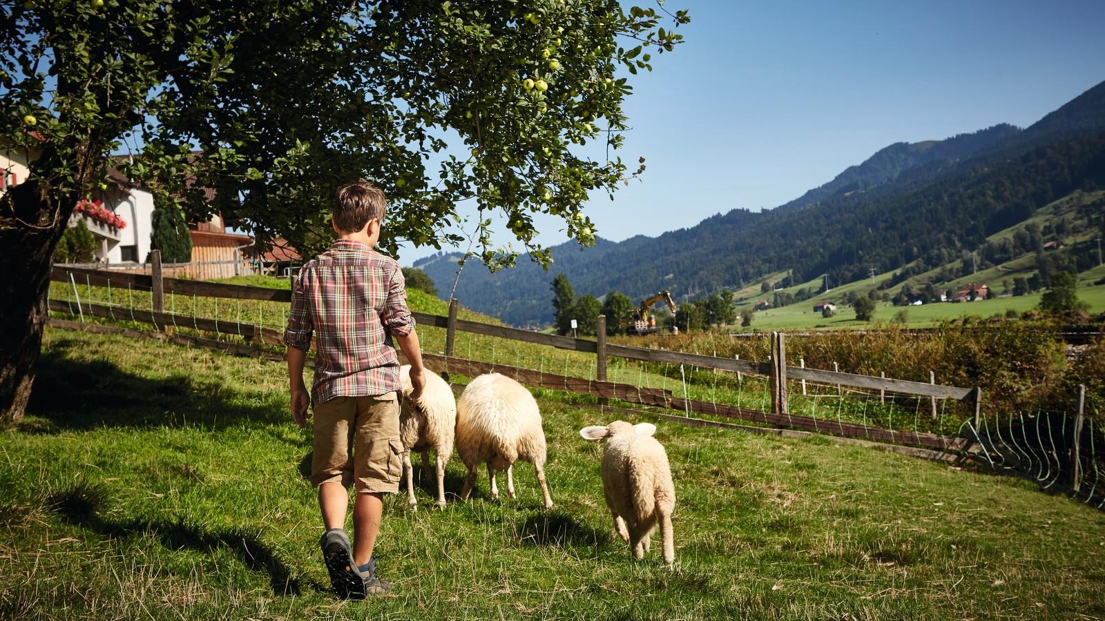 Familienurlaub auf dem Bauernhof mit Tieren in Immenstadt © Allgäu GmbH, Christoph Gramann