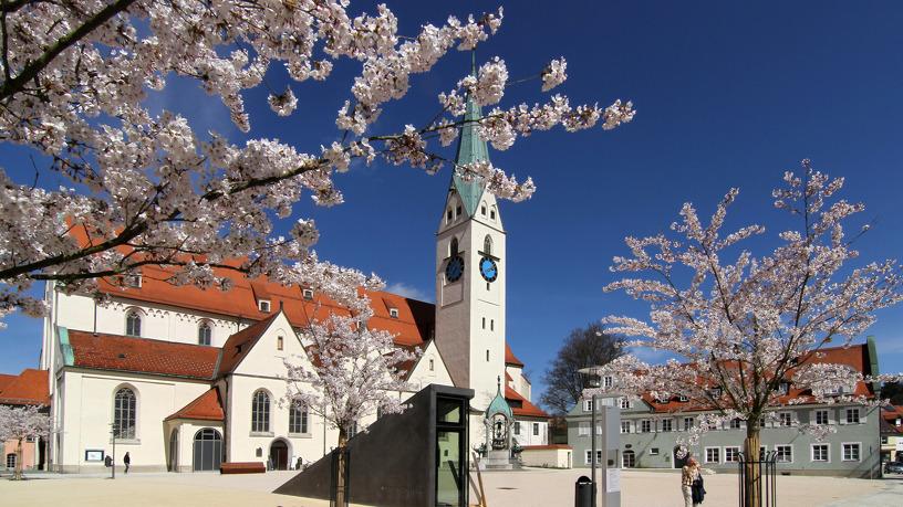 Blühende Kirschblüten im Frühling an der St.-Mang-Kirche
