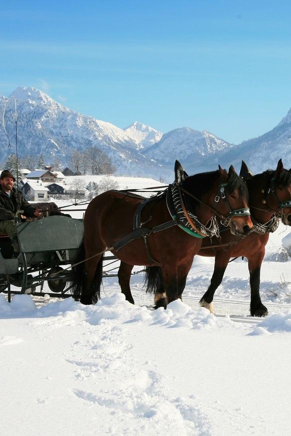 Eine Pferdeschlittenfahrt im verschneiten Allgäu © Füssen Tourismus Marketing