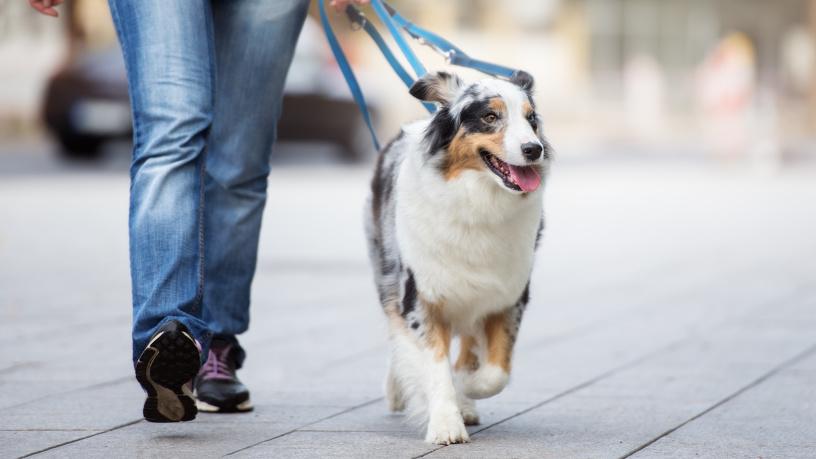 Ein Hund an der Leine in der Stadt